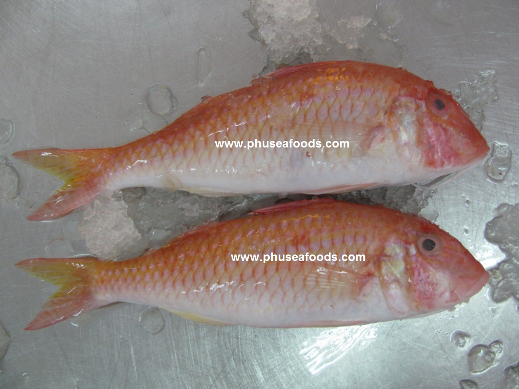 Raw material of red mullet fish for Red mullet fish